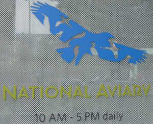 the-aviary2