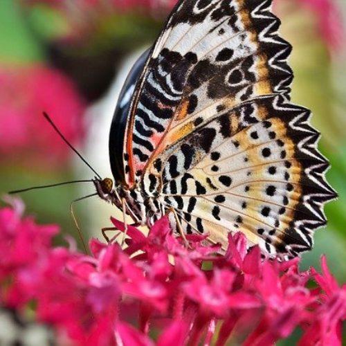 Pittsburgh Botanic Garden: Paradise Found