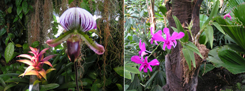 Phipps Orchids