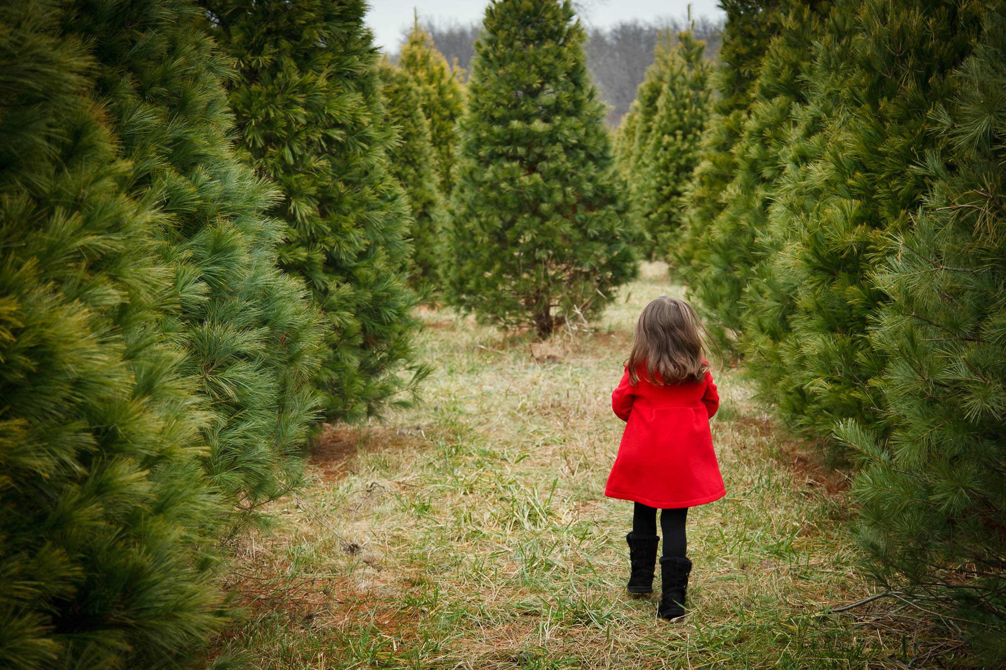 Cut Your Own Christmas Tree Near Me.Cutting Down Your Own Christmas Tree In The Pittsburgh Area