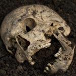 skull-article