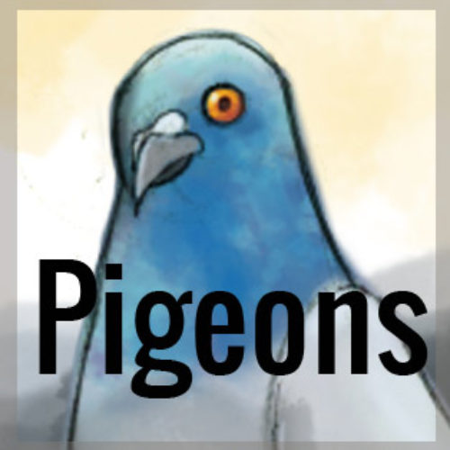 Pittsburgh Pigeons: Love Them or Hate Them