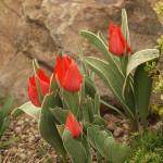 pittsburgh-rock-garden