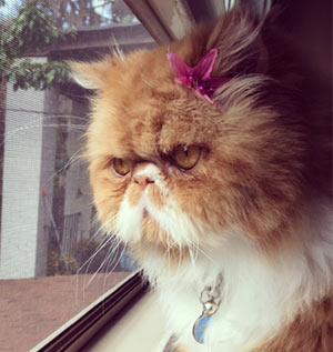 Raquel (de Gante) Issenberg Cat